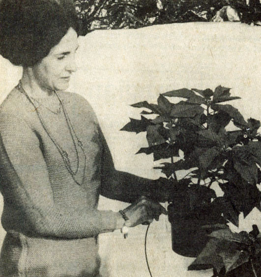 Clare Lind with poinsettia - 1972.