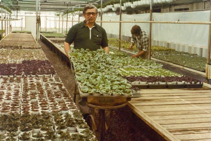 Bob Lind transporting flats of plants - 1978.