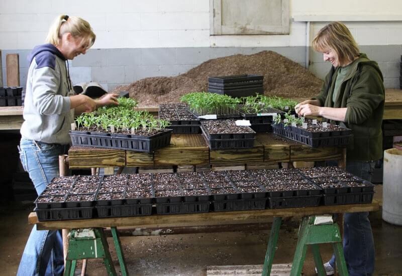 Greenhouse employees Lizzy & Gwen preparing for spring!