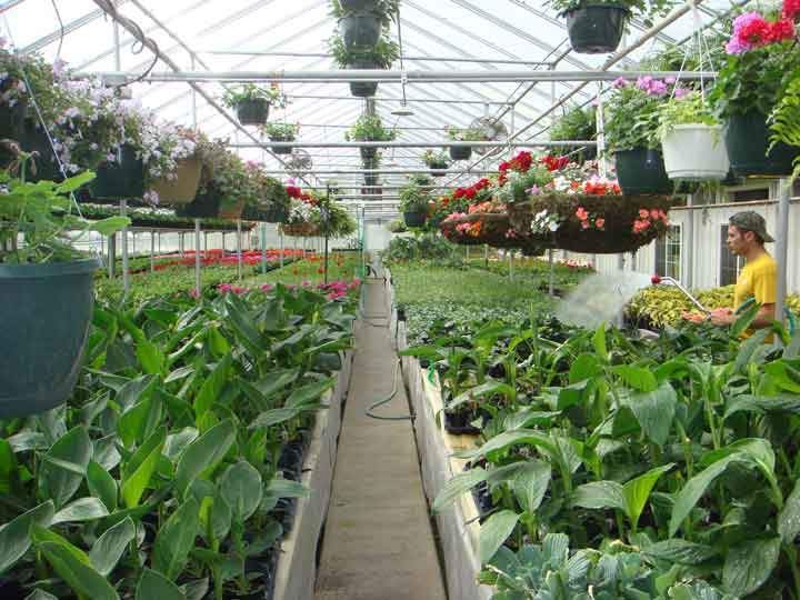 Centerville Greenhouses, Inc. - Inside house #3.