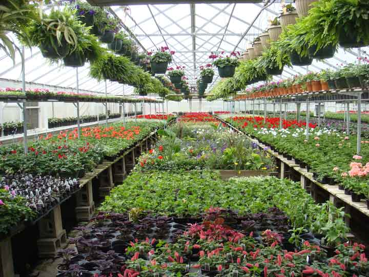 Centerville Greenhouses, Inc. - Inside house #1.