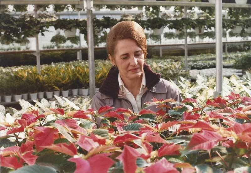 Clare Lind with poinsettias.