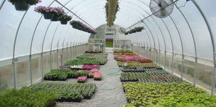 Centerville Greenhouses, Inc. - Inside House 0
