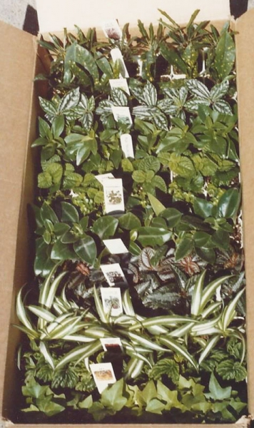 Sample box of foliage plants.